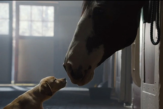Budweiser Best Buds Commercial